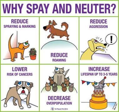 spay-neuter-2