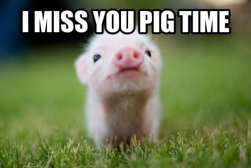 214460-I-Miss-You-Pig-Time